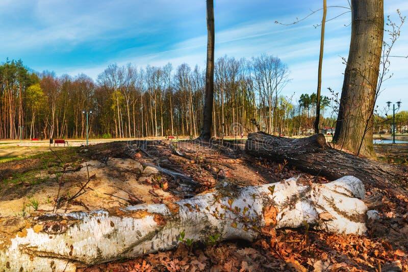 Foresta, parco in molla in anticipo fotografie stock libere da diritti