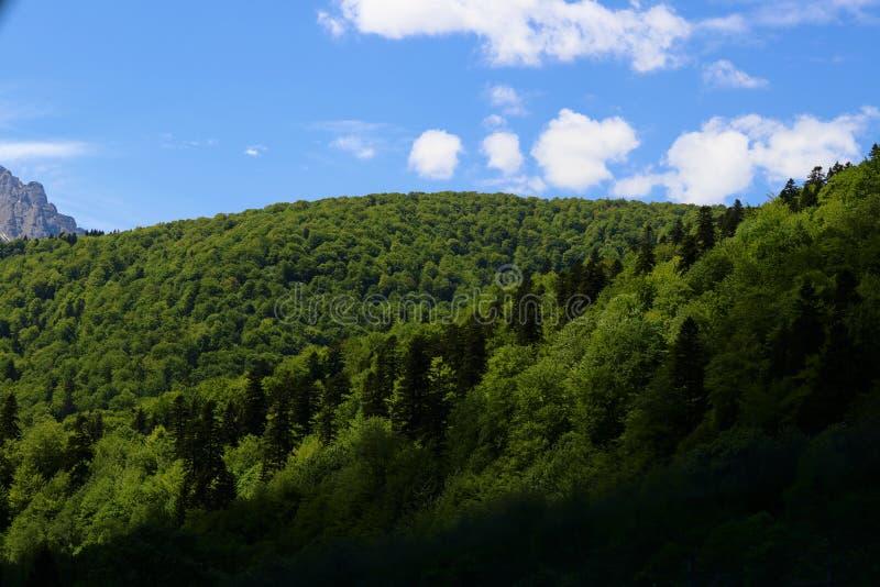 Download Foresta Perfettamente Delimitata Dalle Scelte Blu Del Cielo E Delle Montagne Della Molla Fotografia Stock - Immagine di grigio, bello: 117977518