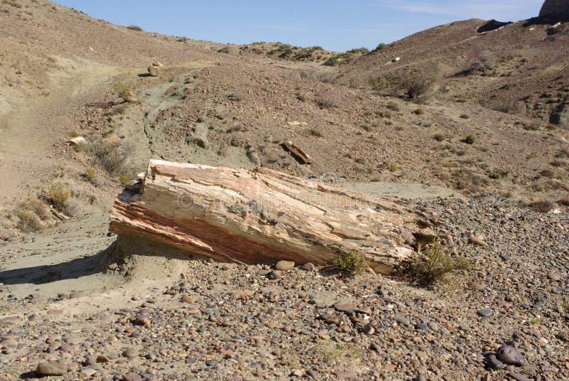 Foresta petrificata nella Patagonia immagini stock