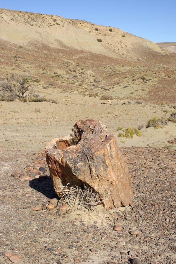 Foresta petrificata, Patagonia immagine stock libera da diritti