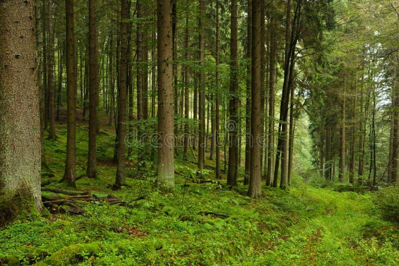 Foresta piovosa fotografia stock libera da diritti