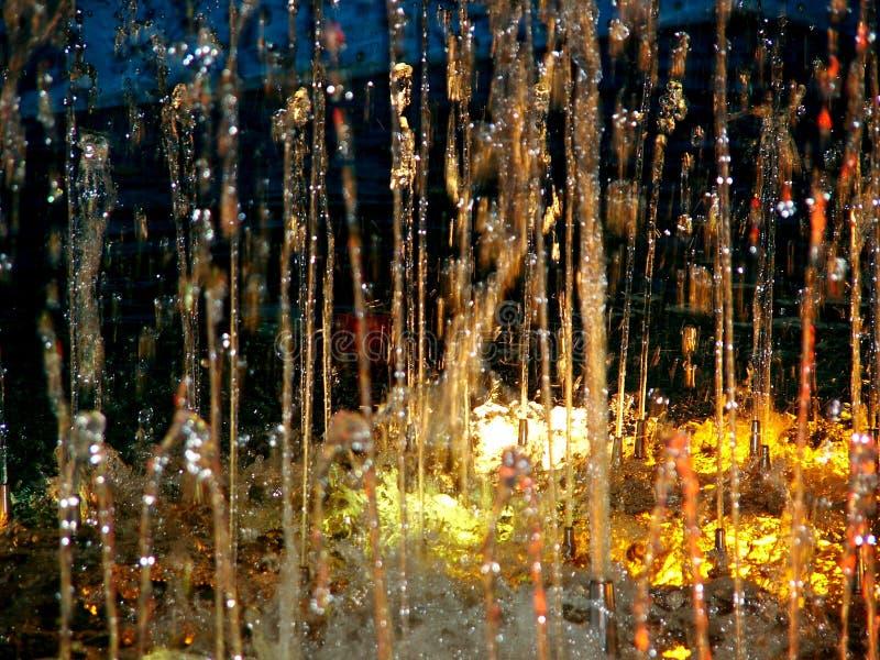 Foresta pluviale fotografia stock libera da diritti