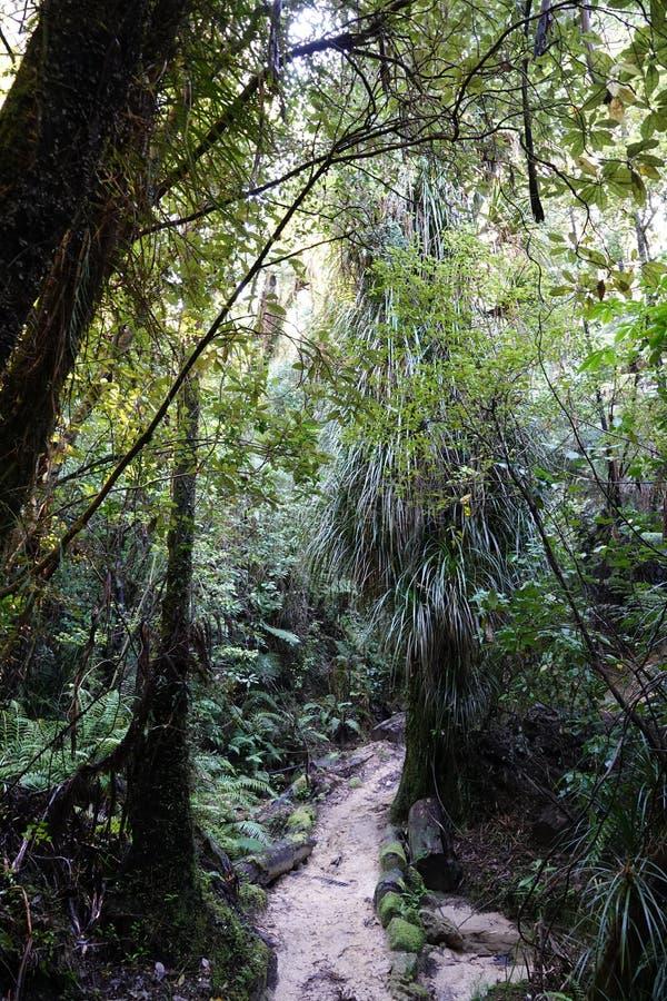 Foresta pluviale in Abel Tasman National Park, Nuova Zelanda fotografia stock libera da diritti