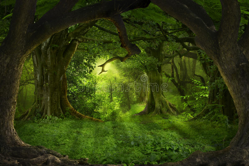 Foresta pluviale asiatica fotografia stock libera da diritti