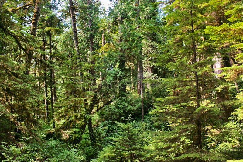 Foresta pluviale in Columbia Britannica, Canada immagine stock libera da diritti