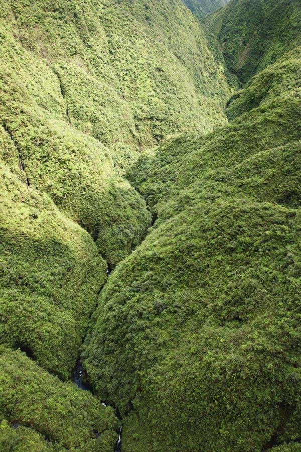 Foresta pluviale del Maui. immagini stock