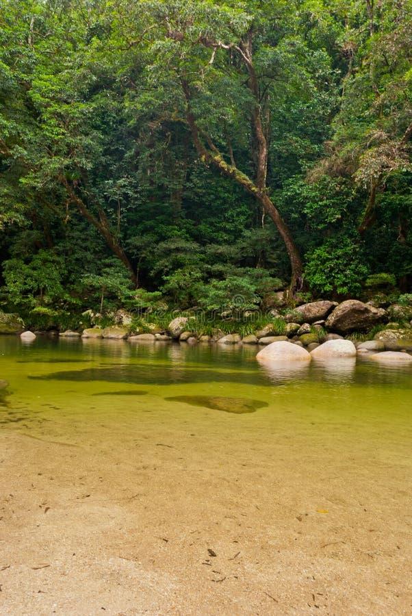 Foresta pluviale della gola di Mossman immagini stock libere da diritti