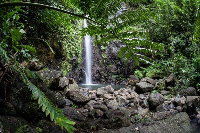 Foresta pluviale e cascata tropicali fotografia stock libera da diritti