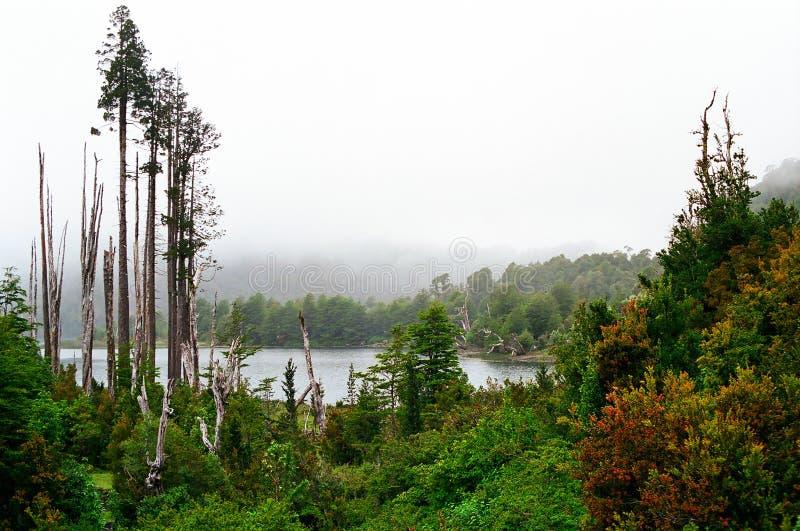 Foresta pluviale e lago, Cile fotografia stock libera da diritti