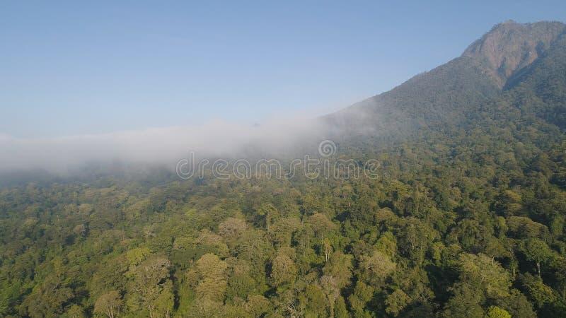 Foresta pluviale e montagne tropicali del paesaggio fotografie stock