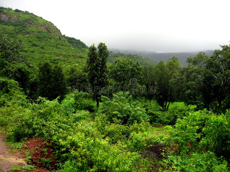 Foresta pluviale fertile immagine stock