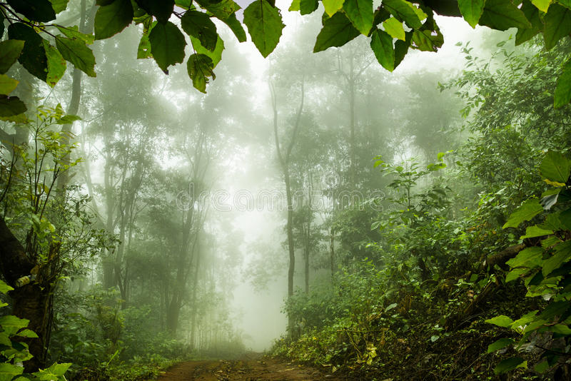Foresta pluviale muscosa, fuoco molle fotografia stock libera da diritti
