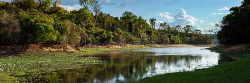 Foresta pluviale nel parco di Ankarafantsika, Madagascar fotografie stock libere da diritti