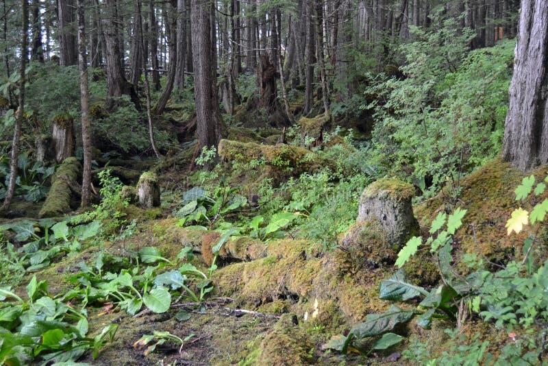 Foresta pluviale nell'Alaska immagine stock