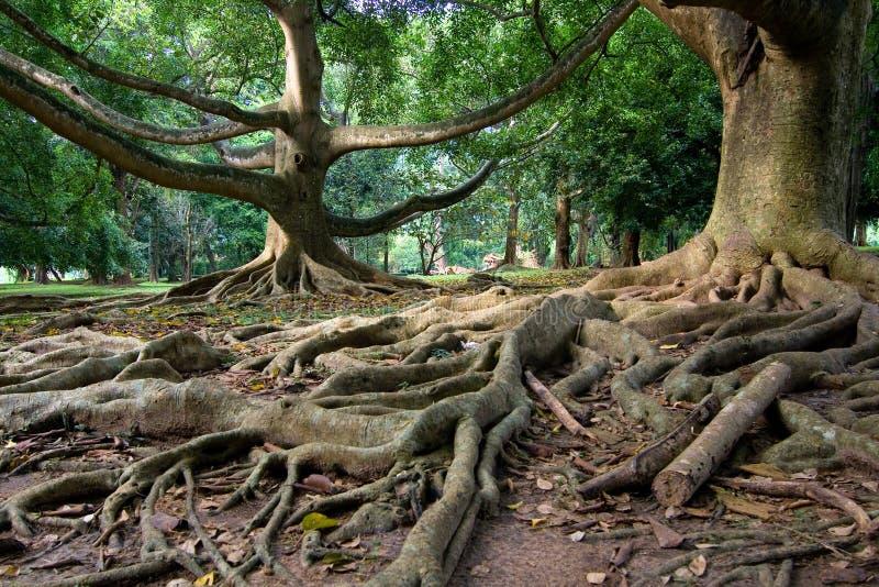 Foresta pluviale primigenia immagine stock
