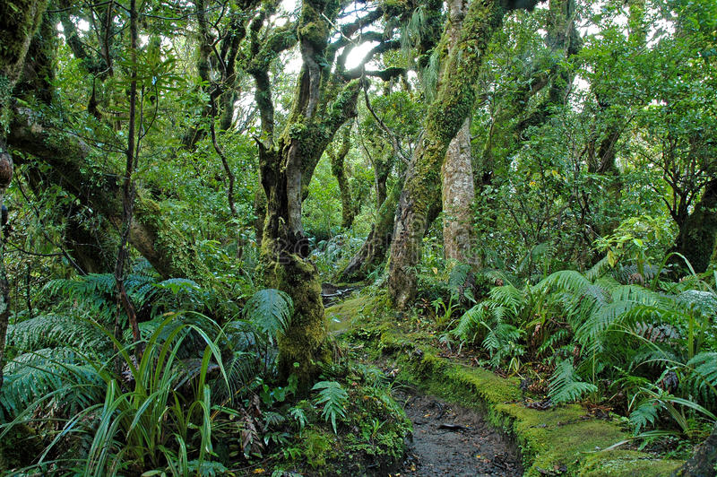 Foresta pluviale in Taranaki, isola del nord, Nuova Zelanda fotografia stock libera da diritti