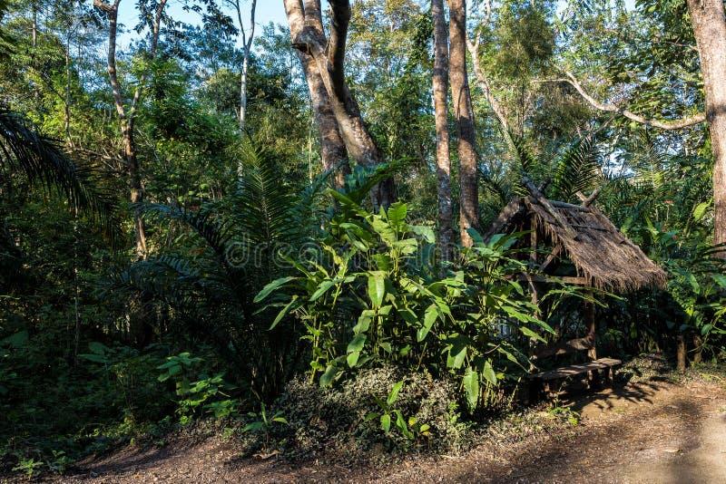 Foresta pluviale vicino a Tat Kuang Si Waterfalls al prabang di Luang, Laos fotografia stock