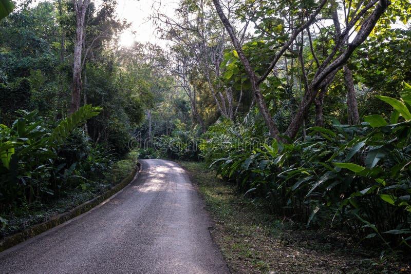 Foresta pluviale vicino a Tat Kuang Si Waterfalls al prabang di Luang, Laos fotografia stock libera da diritti