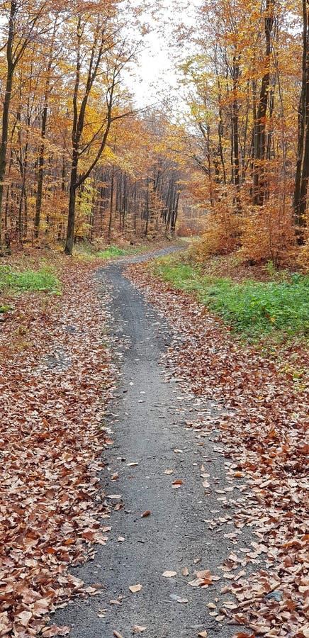 Foresta polacca a nord della Polonia in Otomin fotografia stock libera da diritti