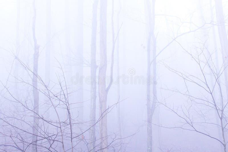 Foresta profonda con nebbia pesante e foschia con un tatto misterioso immagine stock