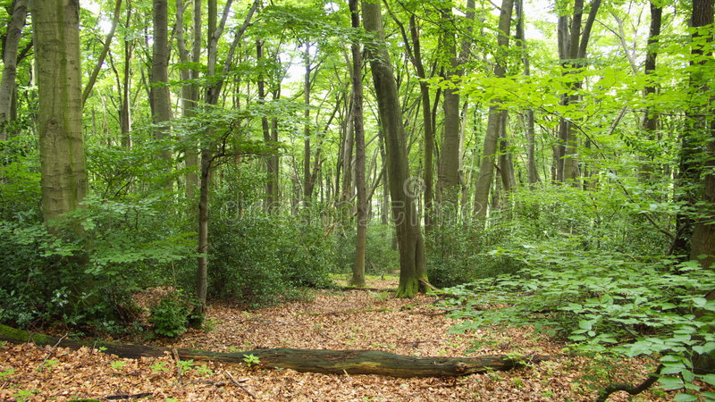 Foresta romantica immagine stock libera da diritti
