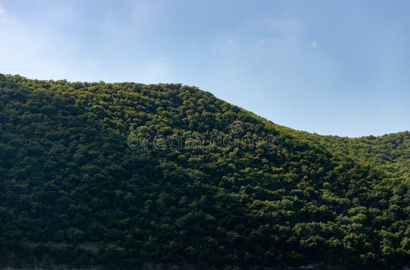 Foresta rurale densa, vista all'aperto del paesaggio con cielo blu fotografia stock libera da diritti