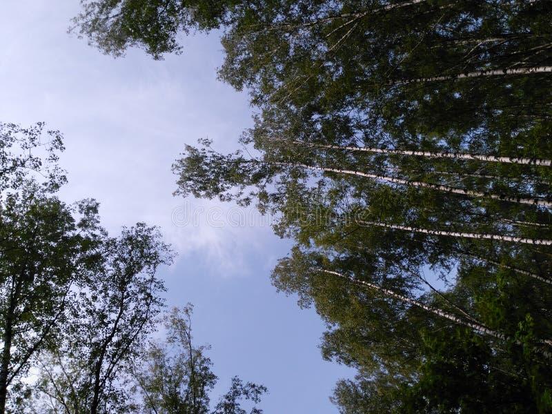 Foresta in Russia fotografie stock