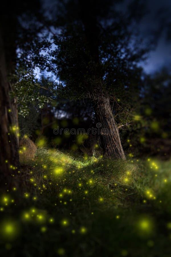 Foresta scura incantata immagine stock