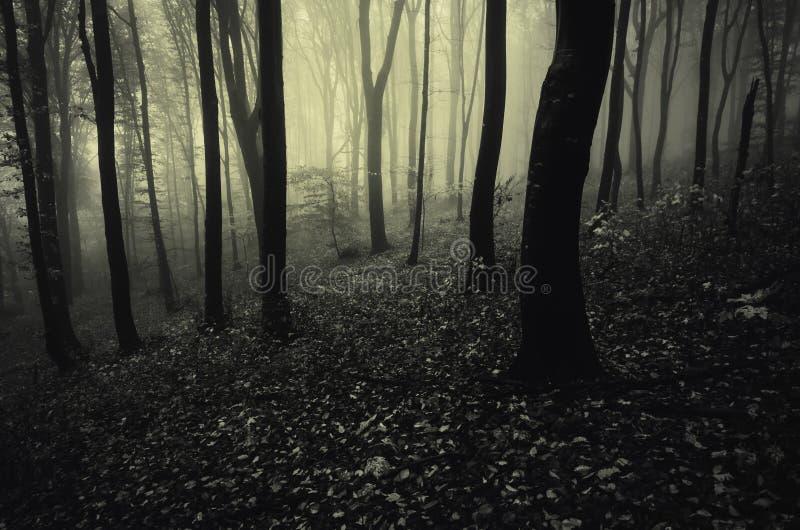 Foresta scura profonda con nebbia misteriosa immagine stock libera da diritti