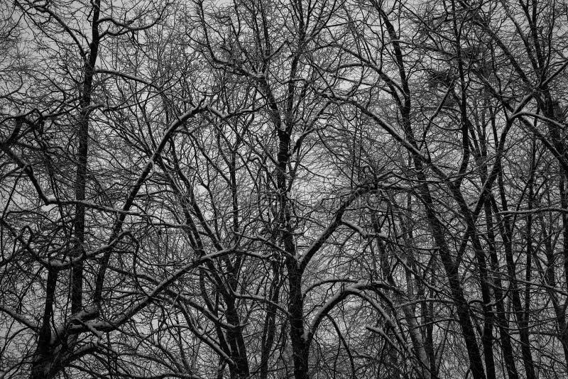 Foresta scura spessa, alberi neri Struttura del fondo dei tronchi di albero immagini stock libere da diritti
