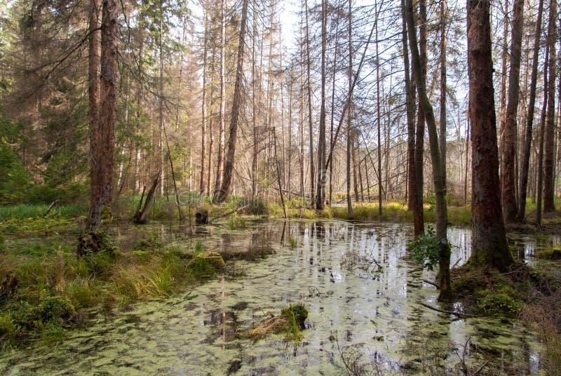 Foresta selvaggia immagini stock