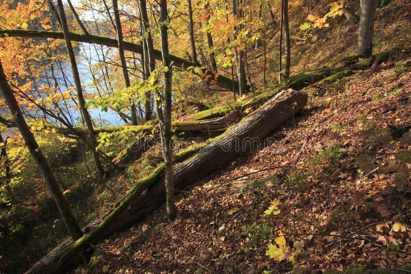 Foresta selvaggia all'autunno fotografia stock