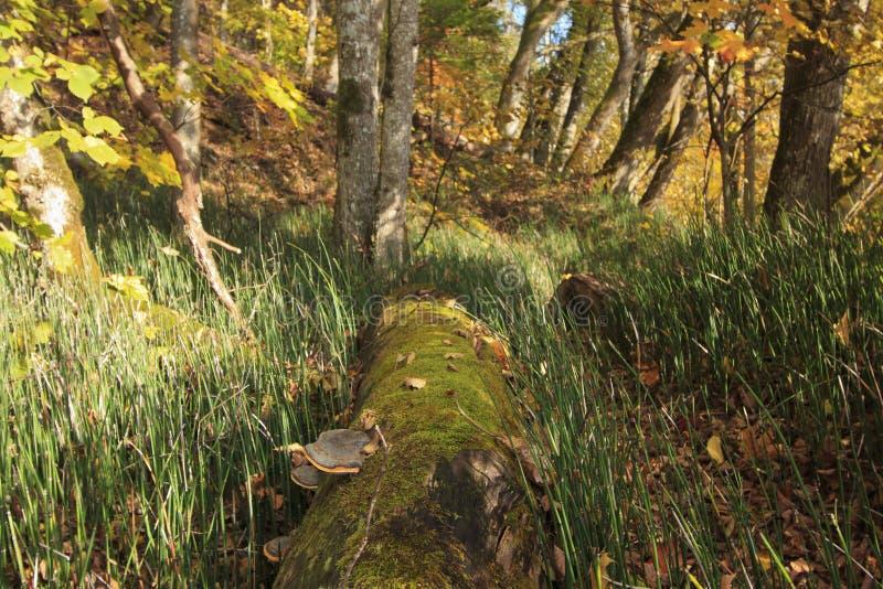 Foresta selvaggia all'autunno fotografie stock