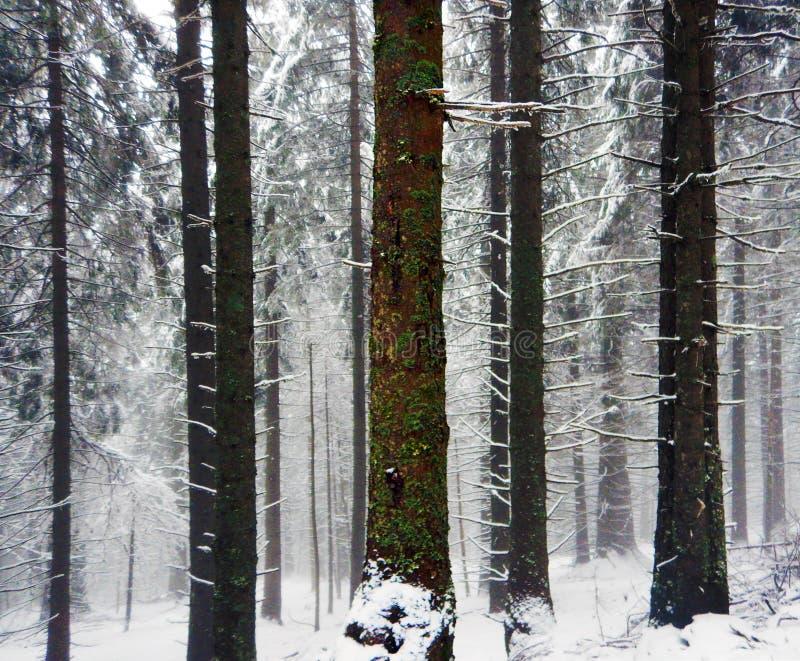 Foresta silenziosa fotografie stock