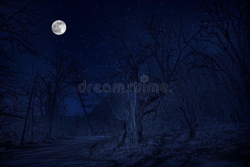 Foresta in siluetta con cielo notturno stellato e la luna piena, fondo di Halloween Foresta spettrale con la luna piena fotografia stock libera da diritti