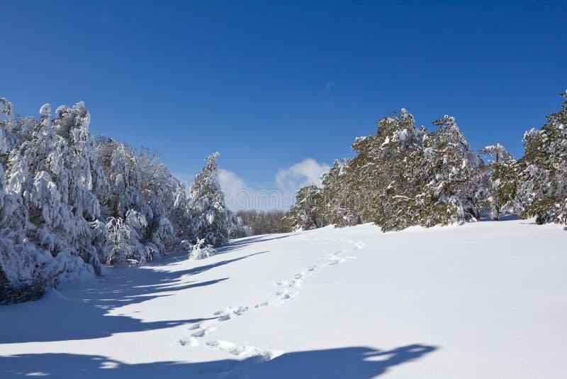 Foresta Snowbound immagine stock