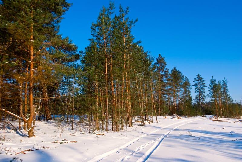Foresta Snowbound di inverno fotografie stock libere da diritti