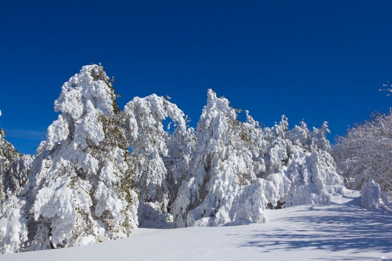 Foresta Snowbound di inverno fotografia stock libera da diritti