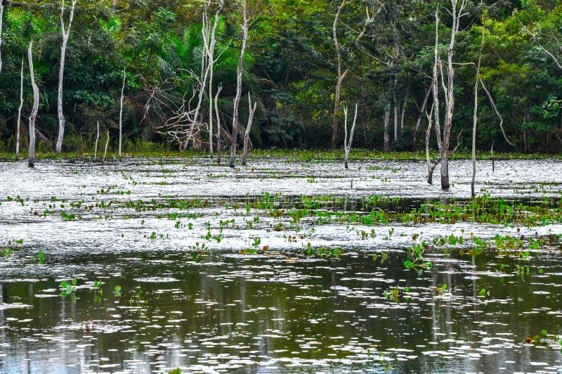 Foresta sommersa, Pantanal, Mato Grosso (Brasile) immagine stock libera da diritti