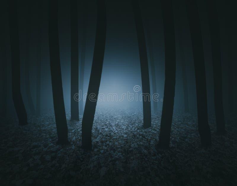 Foresta spaventosa scura immagini stock libere da diritti