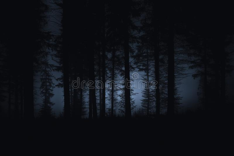Foresta spaventosa scura fotografia stock
