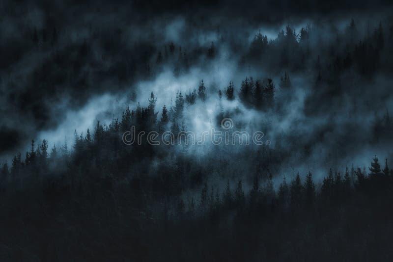 Foresta spaventosa scura con nebbia immagine stock libera da diritti