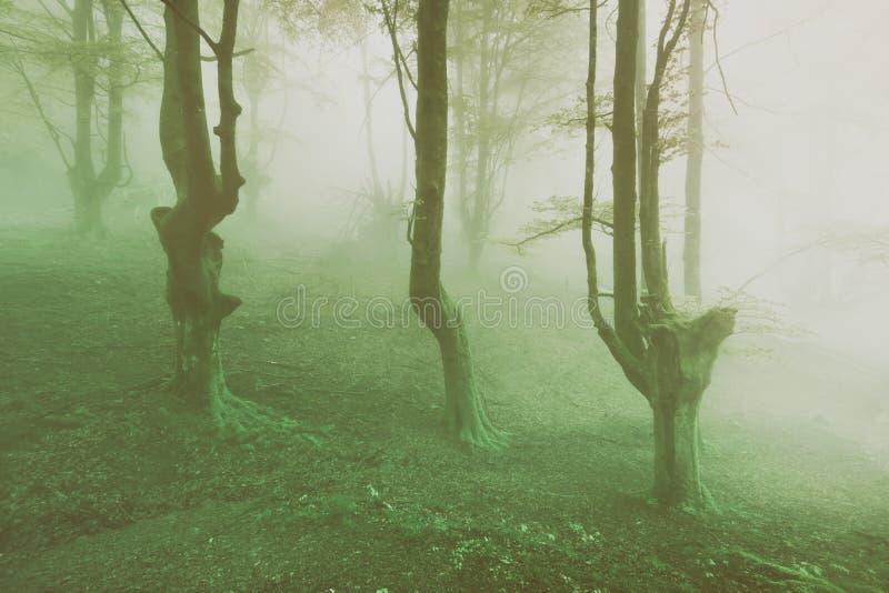 Foresta spettrale d'annata fotografia stock