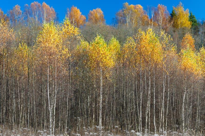 Foresta splendida in autunno, un paesaggio scenico con sole caldo piacevole fotografia stock libera da diritti