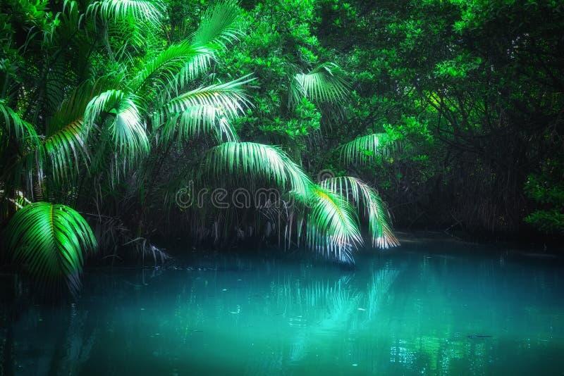 Foresta Sri Lanka della mangrovia del paesaggio di fantasia fotografia stock
