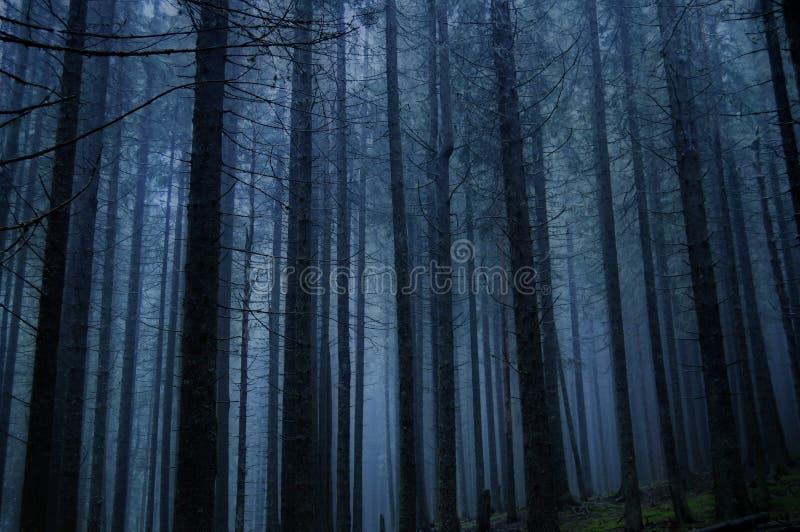 Foresta strana e lugubre immagini stock libere da diritti