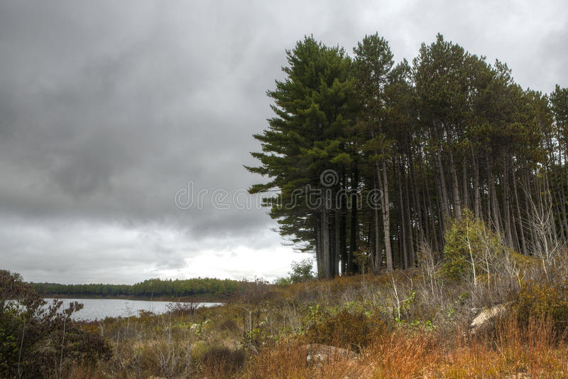 Foresta strana e lugubre fotografia stock libera da diritti