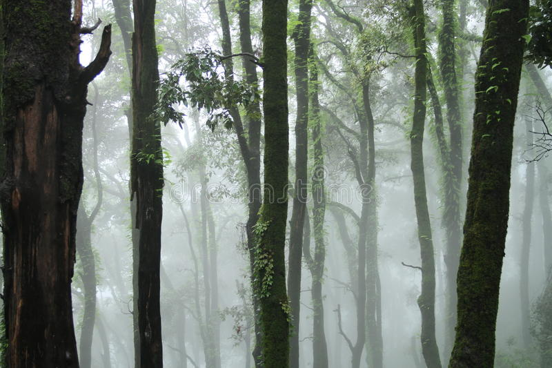 foresta stupefacente fotografia stock libera da diritti