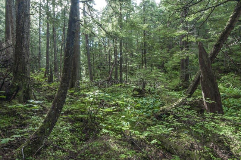 Foresta sudorientale dell'Alaska fotografia stock libera da diritti