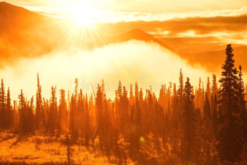 Foresta sull'Alaska immagini stock
